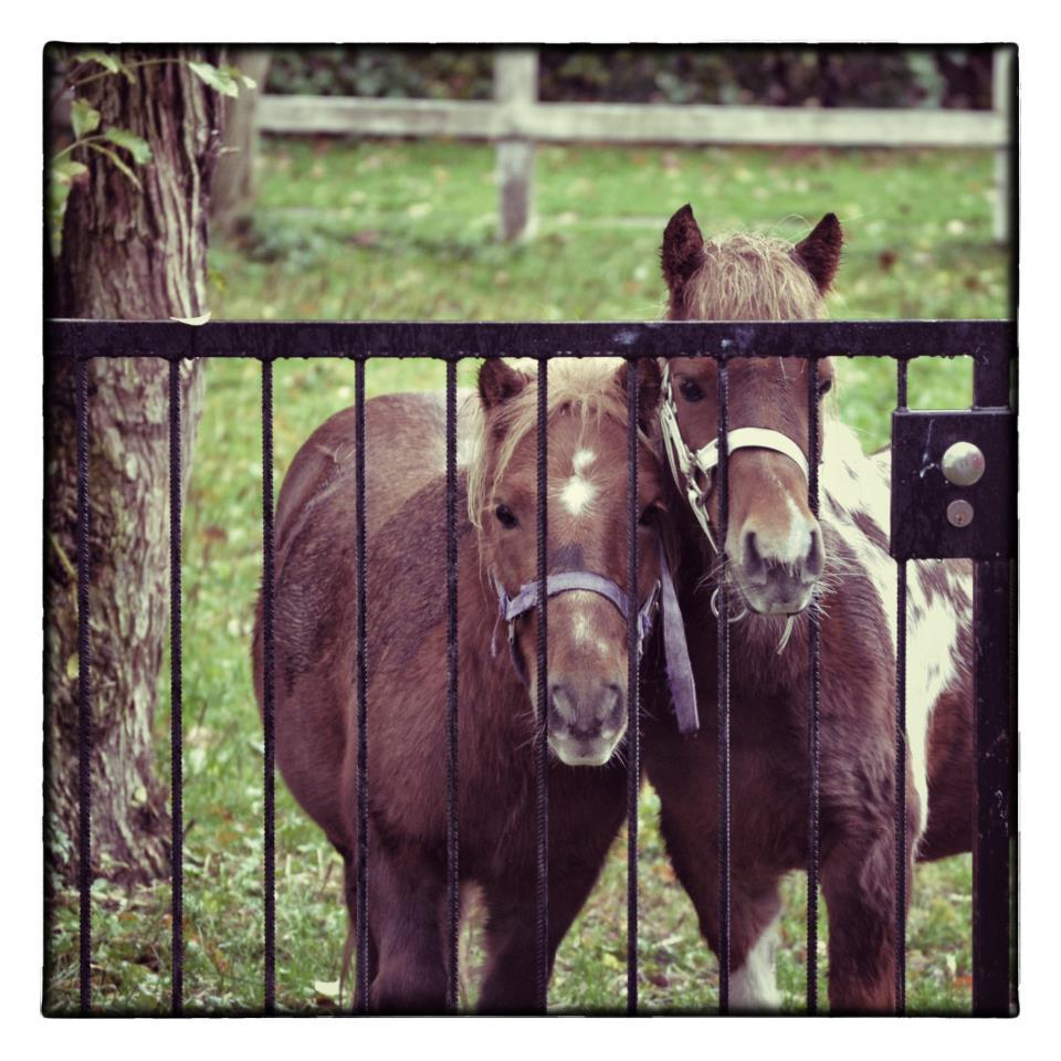 hest til fastelavn
