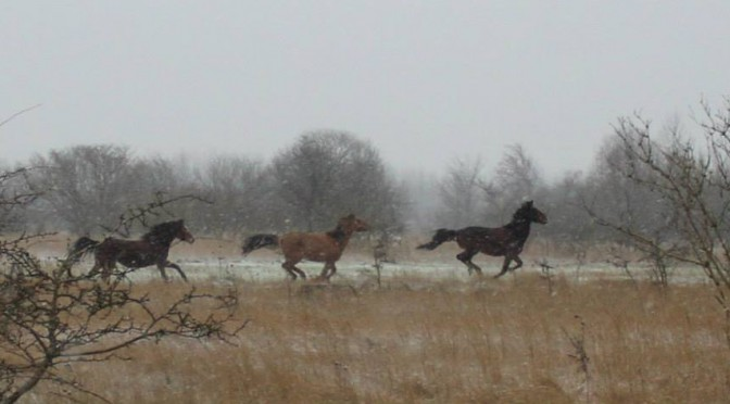Hestene løs på Tippen