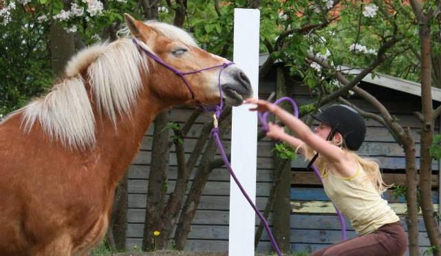 Hestehvisker kursus maj 2013